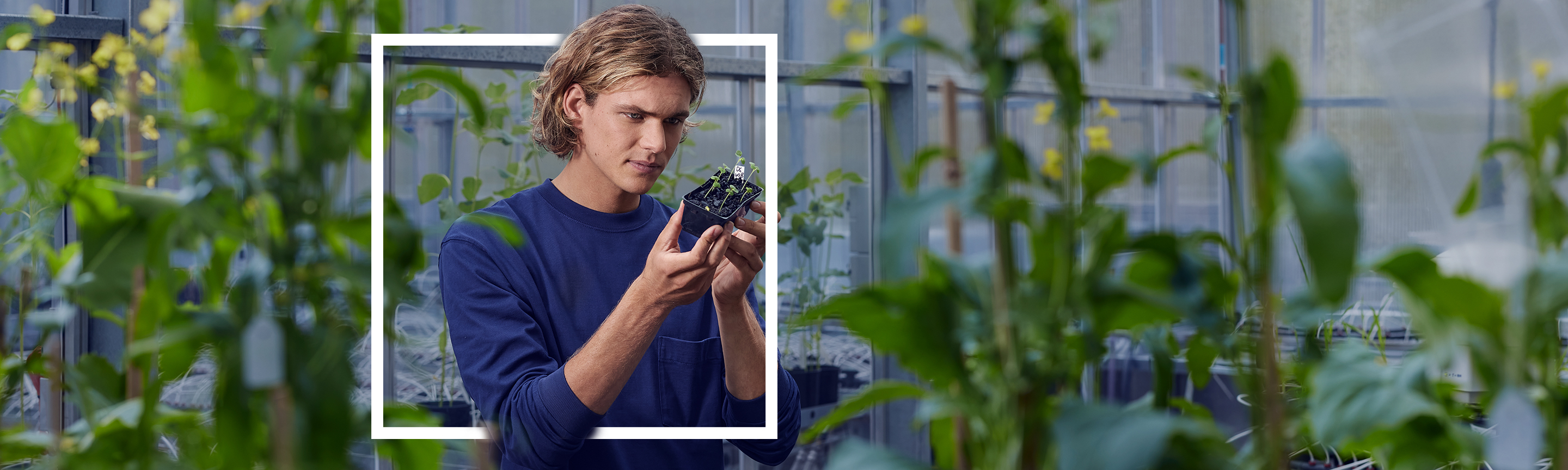 Student in greenhouse holding seedlings