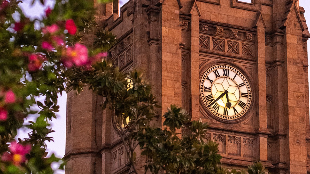 Clocktower glows pink from the setting sun with blurred roses in the foreground